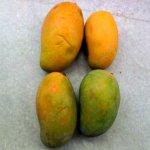 Dashari  Mango